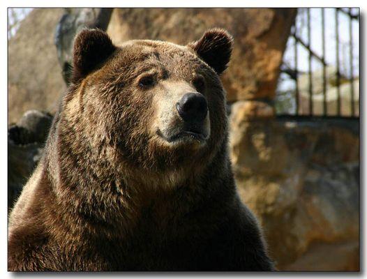 Kam ein kleiner Teddybär ...
