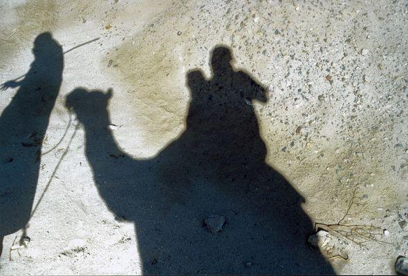 KAMEL im Schatten der Wüstensonne