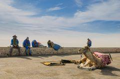 Kamel und Menschen in blauen Gewändern auf der Kasbah von Agadir (Marokko)