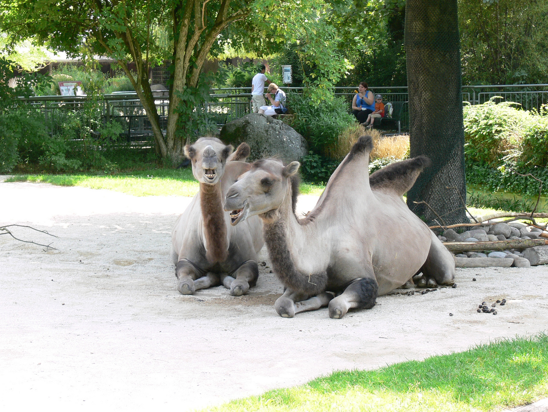 Kamel was guckst Du