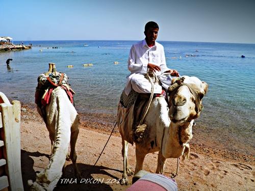 Kamelbesuch am Strand von Dahab