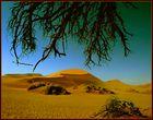 Kameldornbaum in der Namib II