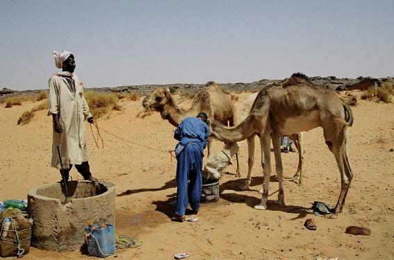 Kamele am Brunnen