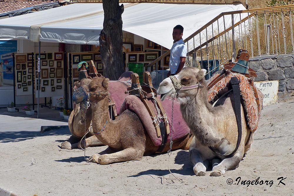 Kamele warten auf Kunden zu einem Ritt durch die Tuffsteinlandschaft