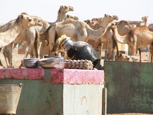 Kamelmarkt Shalateen