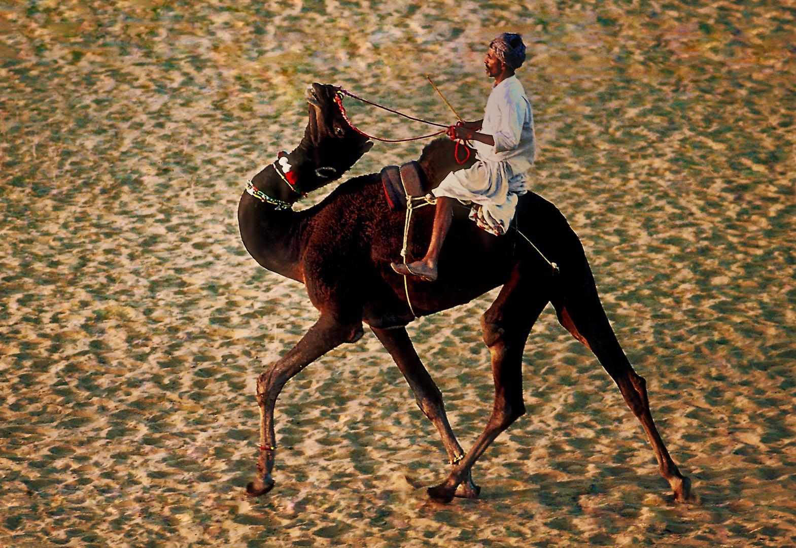 Kamelreiter in der Wüste