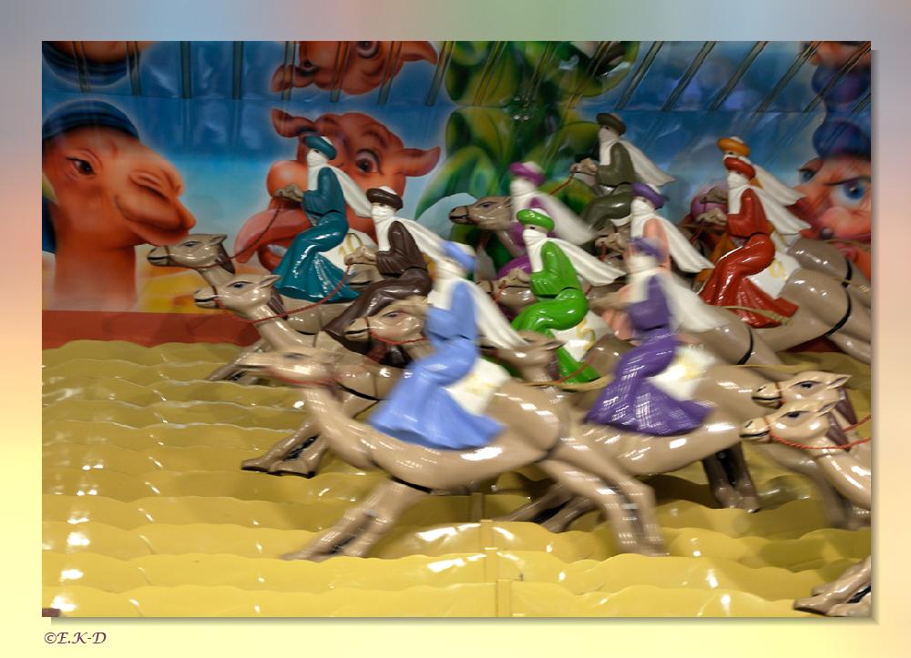 Kamelrennen...