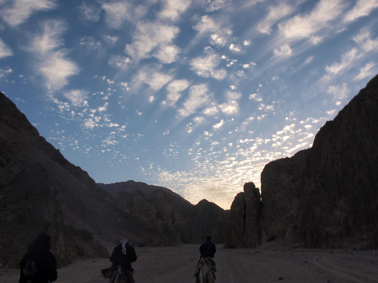 Kamelritt im Wadi