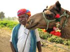 Kamelsafari durch die Wüste Thar bitte aufsteigen