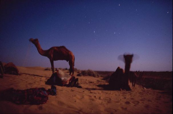 Kamelsterne