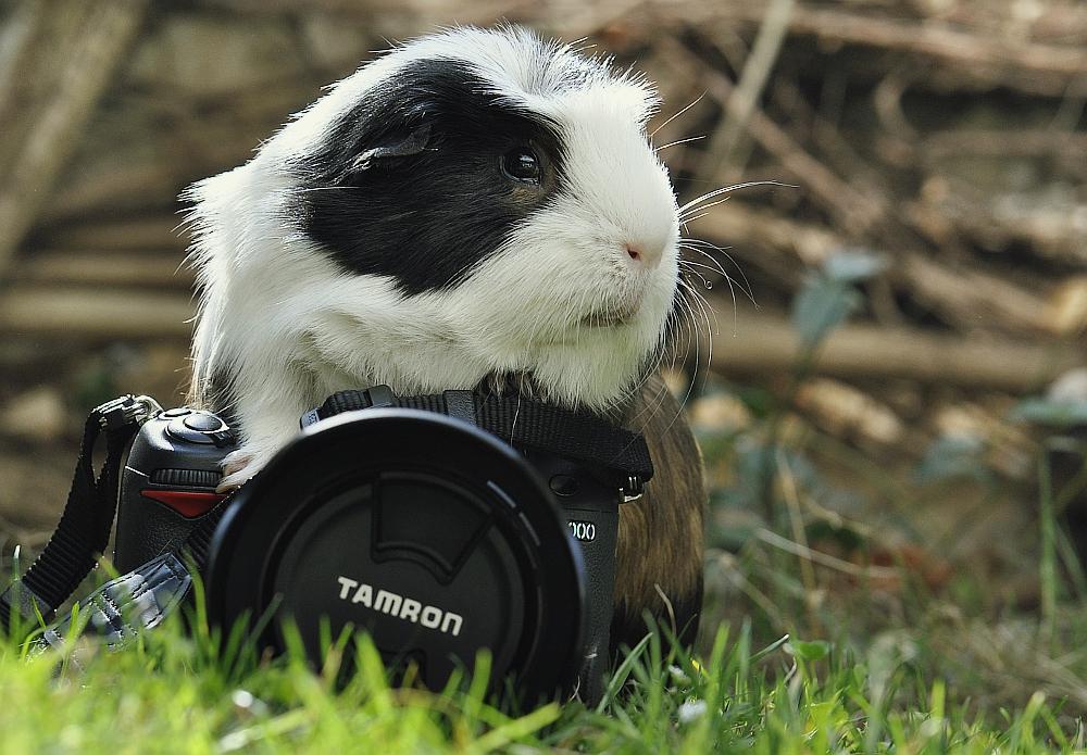 Kameraschwein...
