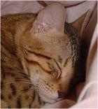 Kami cat sleeps