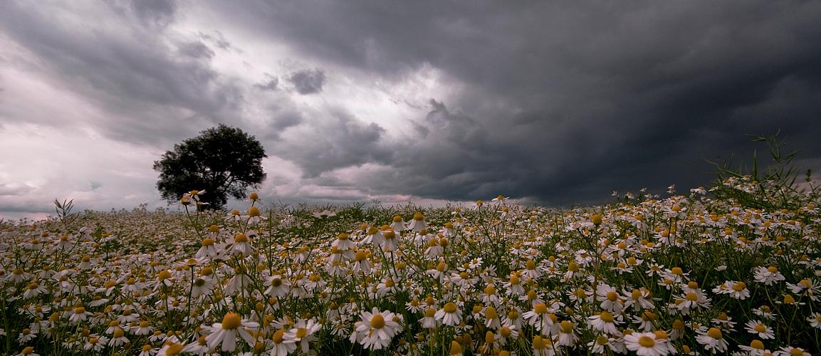 Kamille & Wolken 2