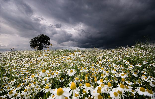 Kamille & Wolken