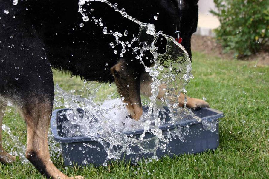 Kampf dem Wasser2