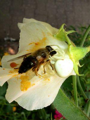 Kampf der Insekten.