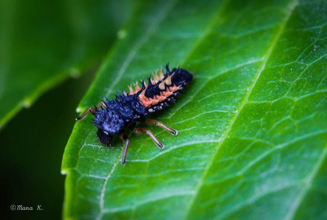 Kampf - Käfer