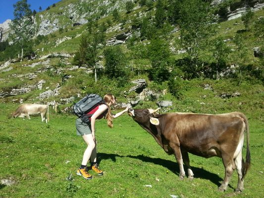 Kampf zwischen Kuh und Frau beim Seealpsee