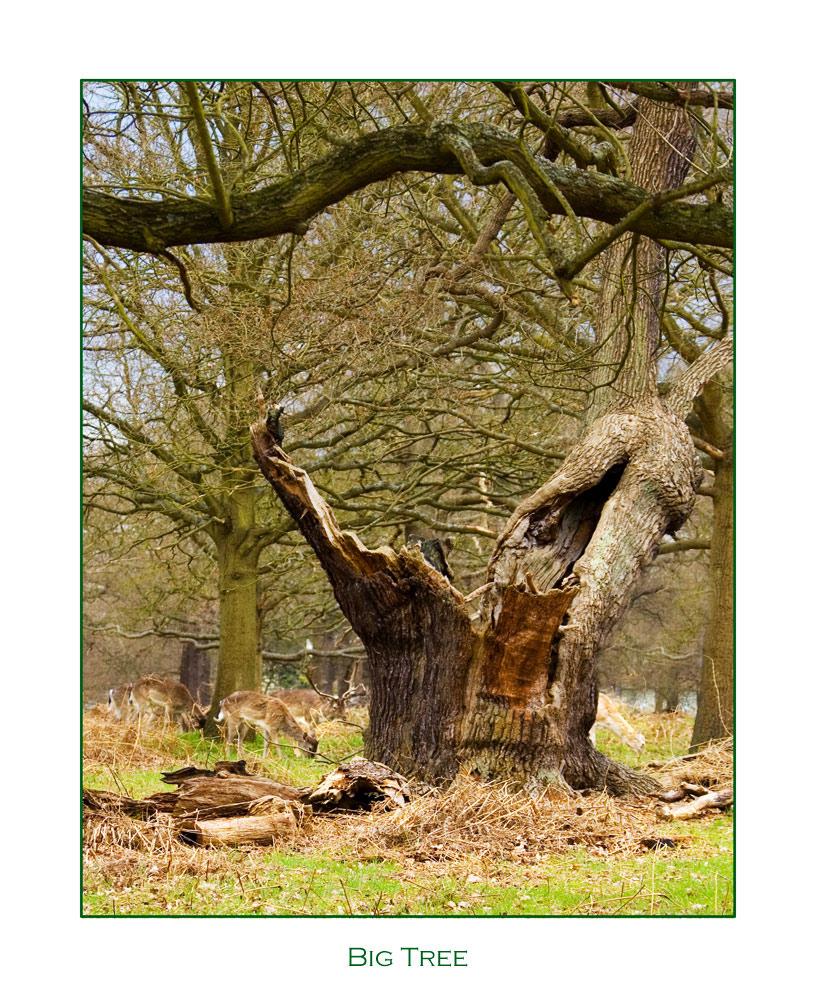 Kampfbaum