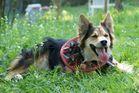 Kampfhund;)))