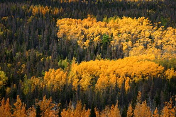 Kanada's Farben im Herbst