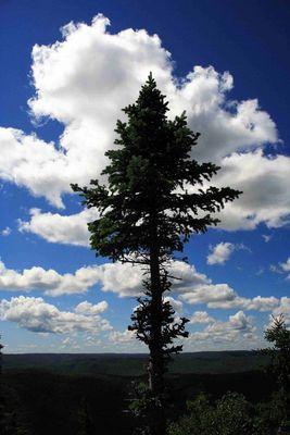 Kanada's Wälder
