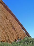 Kangaroo Tail, Uluru, Central Australia