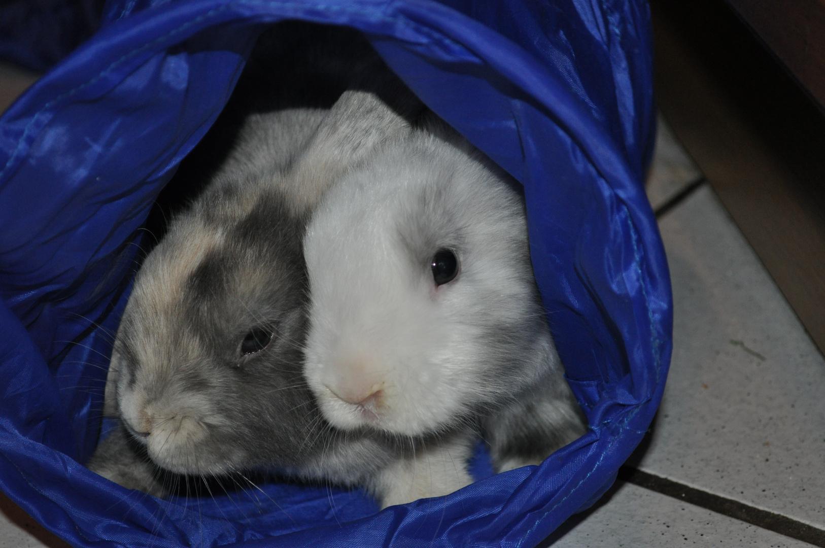 Kaninchen 2