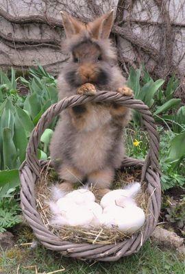 Kaninchen als Osterhase