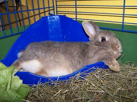 Kaninchen bei 30 Grad Innentemperatur ;-)