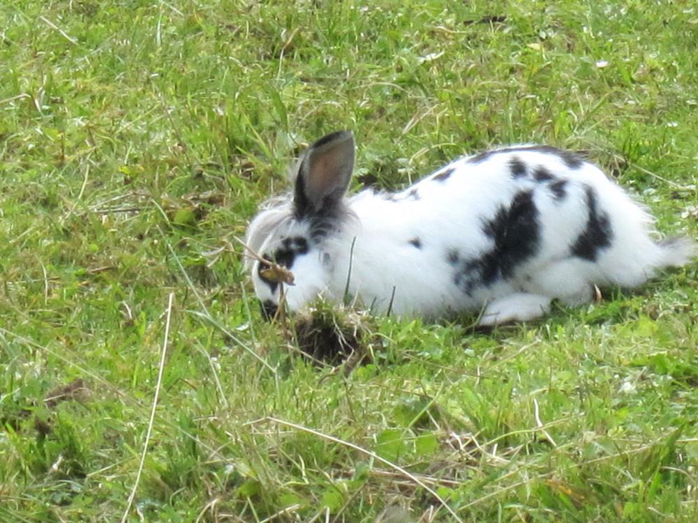 Kaninchen im Stubaital