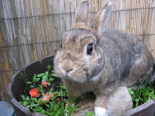 Kaninchen im Topf ;)