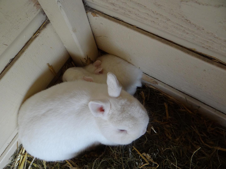 Kaninchen mit Jungen