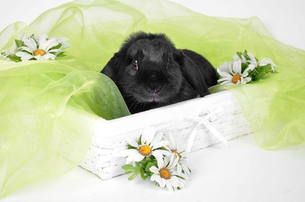 Kaninchen Phili