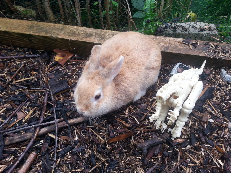 Kaninchen und die Zukunft
