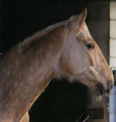 Kann ein Pferd traurig sein?