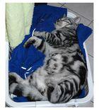 Kann es etwas schöneres als frische Wäsche geben?