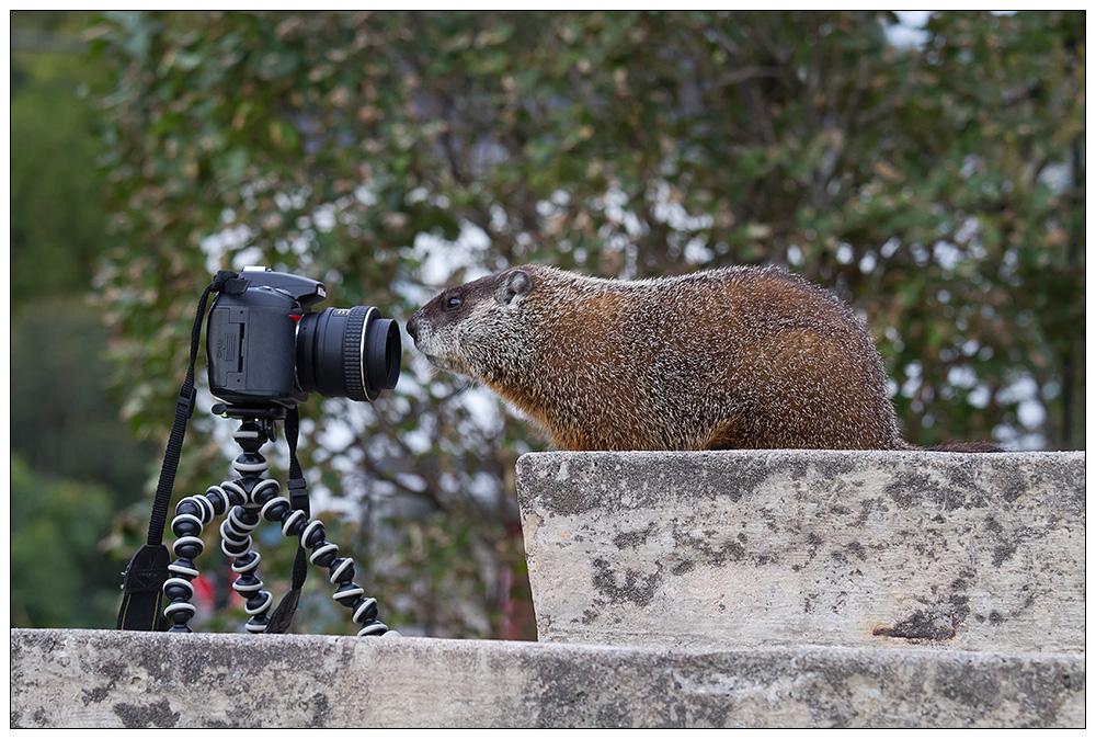 Kann man einer Nikon trauen?