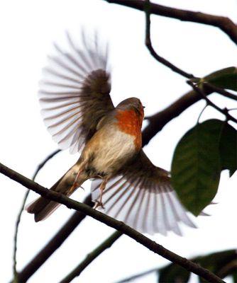 kann nicht nur singen sondern auch fliegen :-))