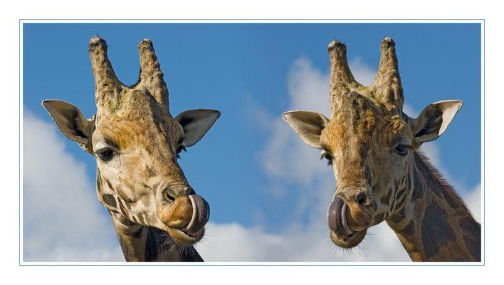 Kannst Du mit Deiner Zunge auch in der linken Nase bohren ...