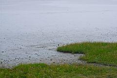 Kante/Grenze des grünen Vorlandes zum regelmäßigen Überflutungsgebiet des Wattenmeeres