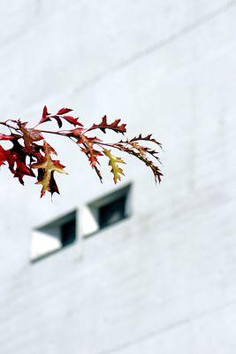 Kanzler-Herbst