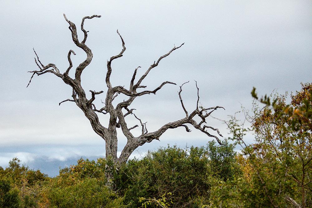 Kapama Nature Reserve / Südafrika