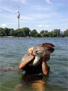Kapitaler Wels in der Alten Donau - iPhone-Foto