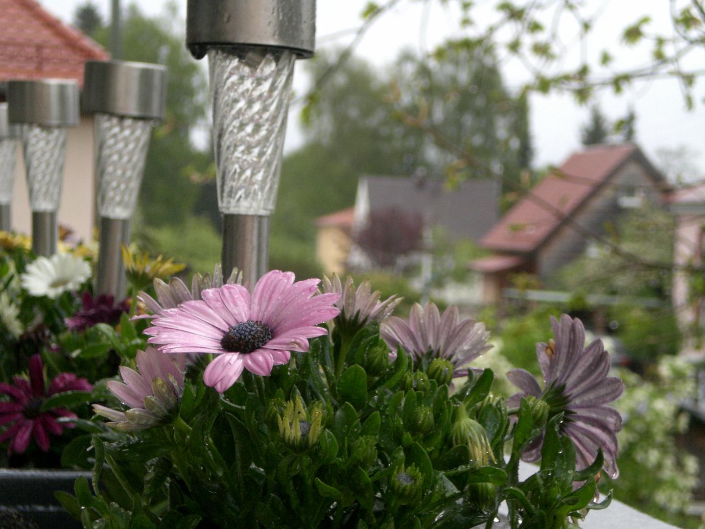 Kapkörbchen im Frühling
