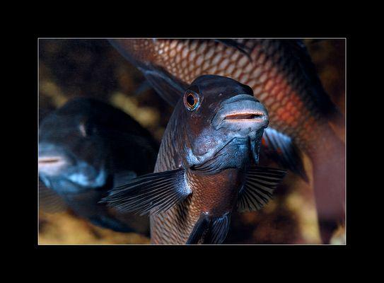 Karfreitag gibts Fisch :-)