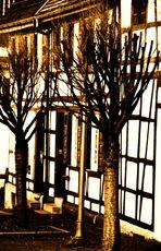 Karge Bäume vor alten Fachwerkhäusern
