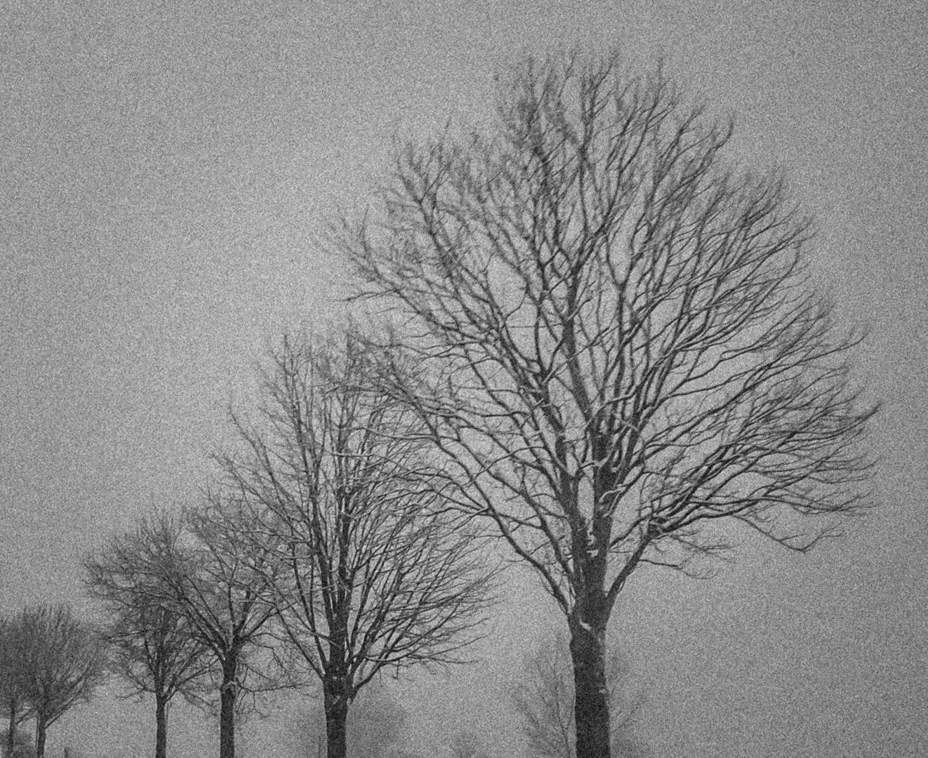 Karge Winterzeit