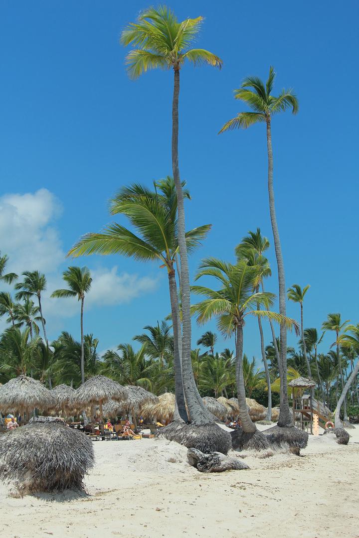 Karibik pur!