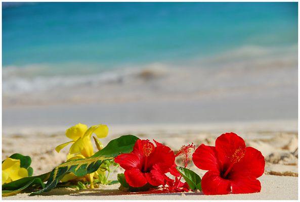 *karibische Blumengrüße*